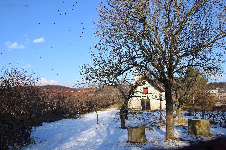 z is Füred. Jóleső látkép több évszázados présházzal, gyümölcsfákkal a Bocsár-dűlő aljában.