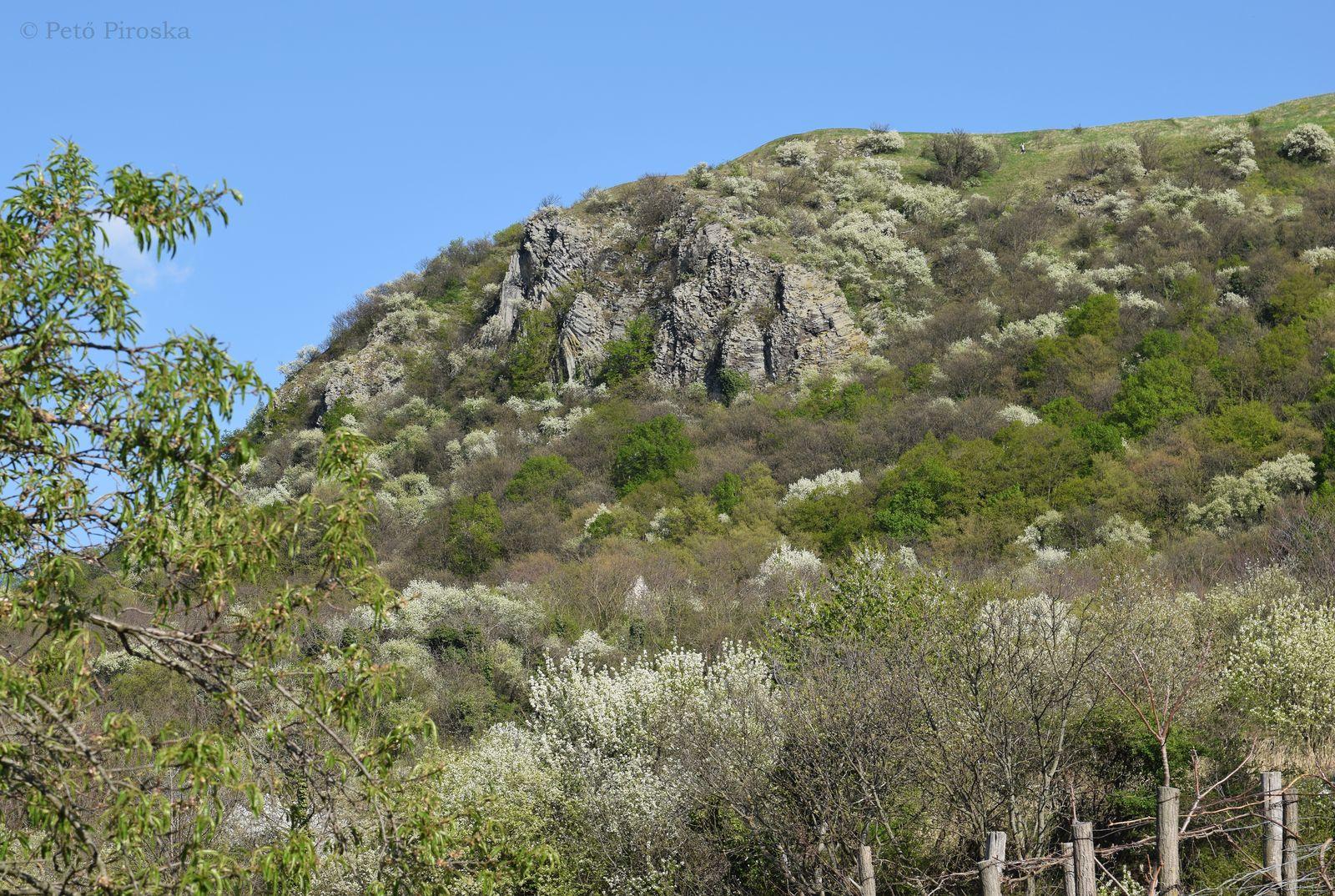 A hegytetőt a Tapolcai Bazalt Formáció kőzete építi fel
