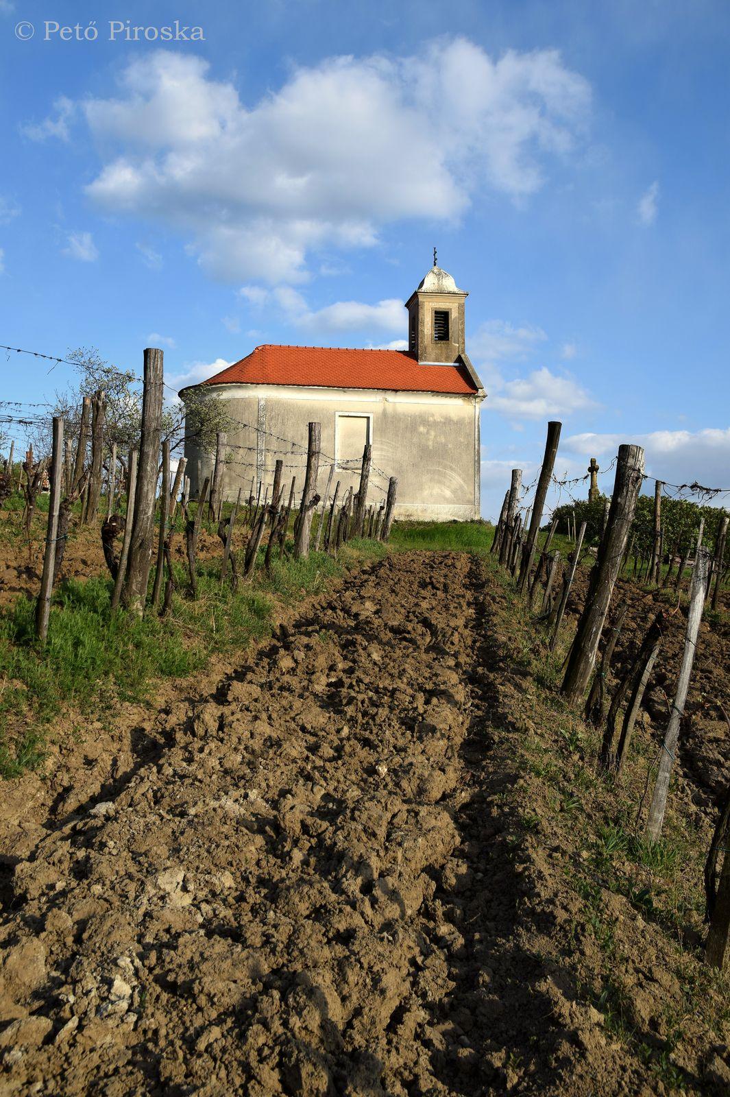 A kápolna közvetlen közelében művel szőlő- ez a lényeg!!!