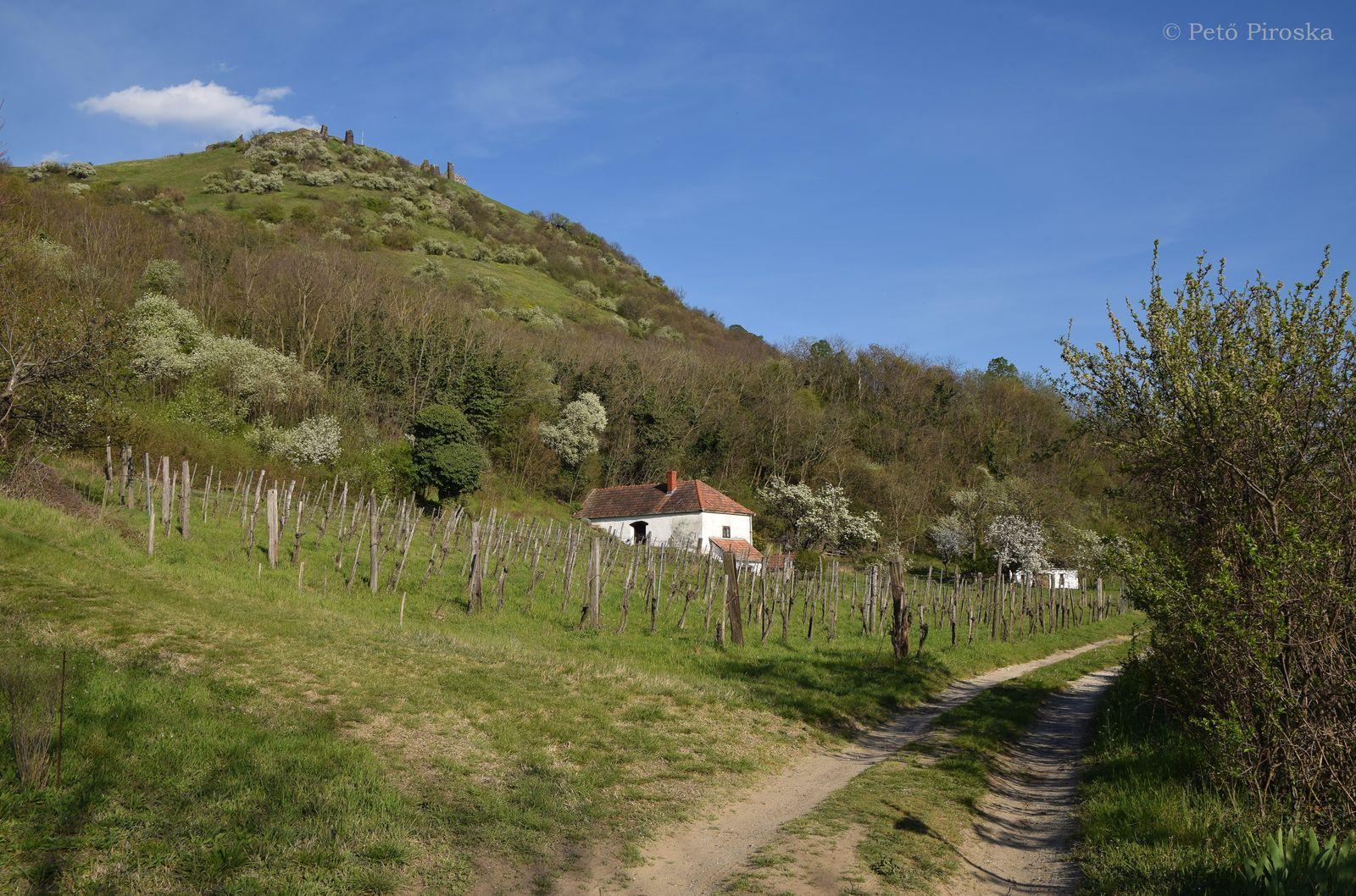 Harmóniát sugárzó hegyrészlet; a présház és a földterület fenntartásáért köszönet a tulajdonosoknak!